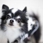 【ペット好きの方必見】愛犬のためのリフォームポイント